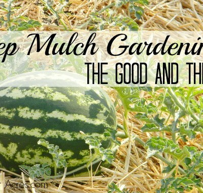 Deep Mulch Gardening – The Good AND The Bad
