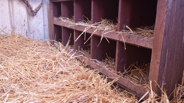 A little fresh straw or shavings every few days goes a long way to keep your eggs clean.