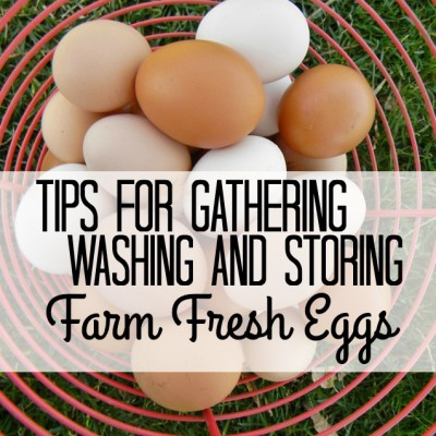 Tips for Gathering, Washing and Storing Farm Fresh Eggs