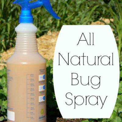 Homemade All Natural Insect Spray For Your Garden
